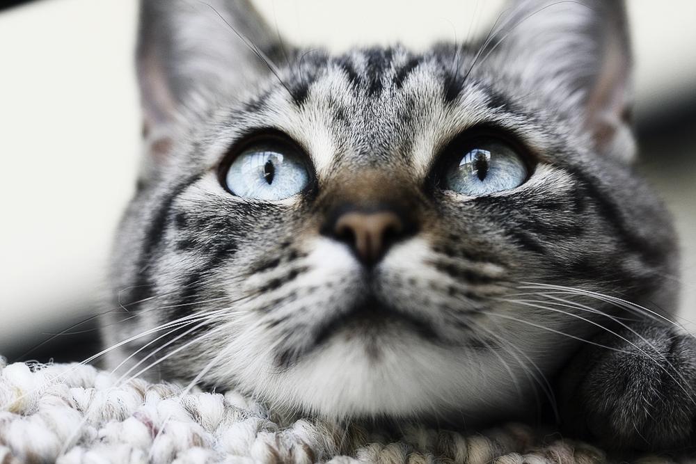 Можно ли кормить котят только влажным кормом одновременно