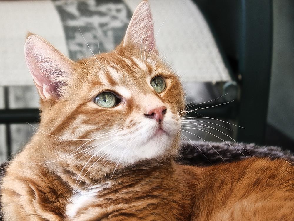 Гамавит: инструкция по применению для кошек