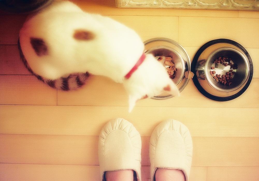 Корм для кошек Анимонда: особенности и преимущества