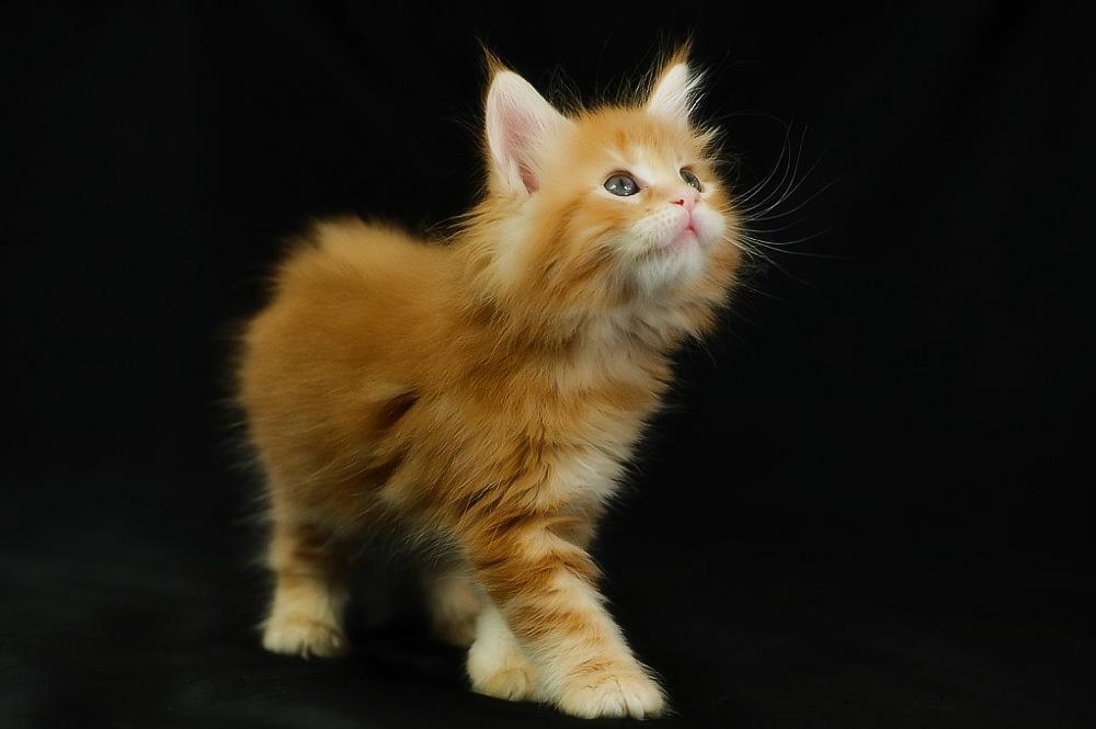 Как назвать рыжего кота мальчика?