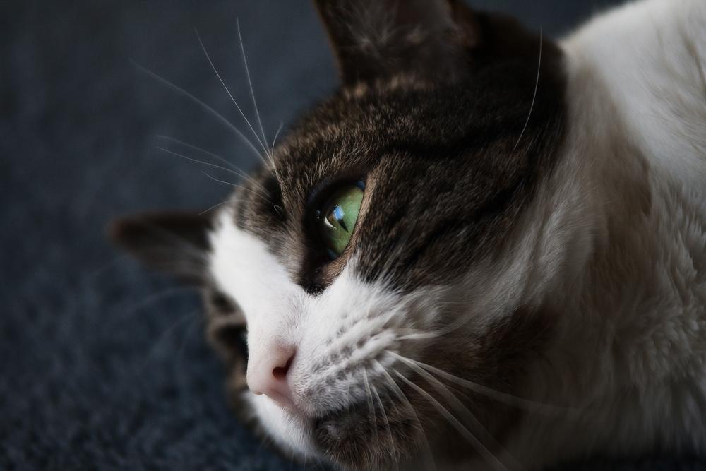 Кошка прогибается фото