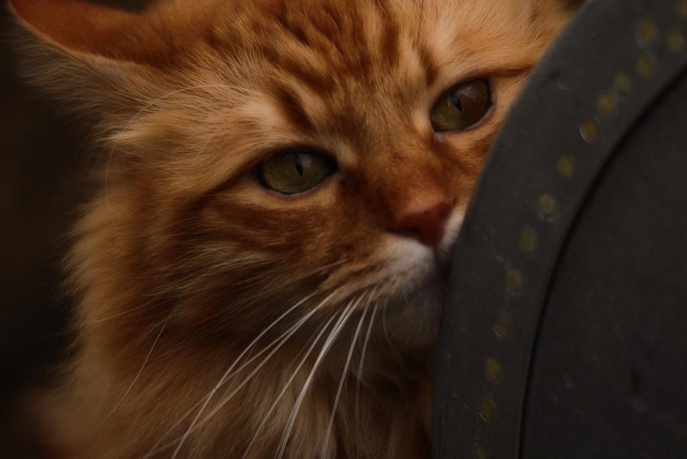 Котёнок чихает и из носа идёт гной zub-doc.ru
