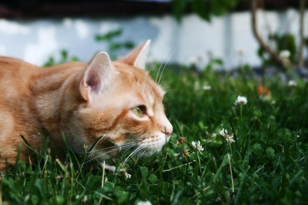 котэрвин инструкция по применению для кошек видео