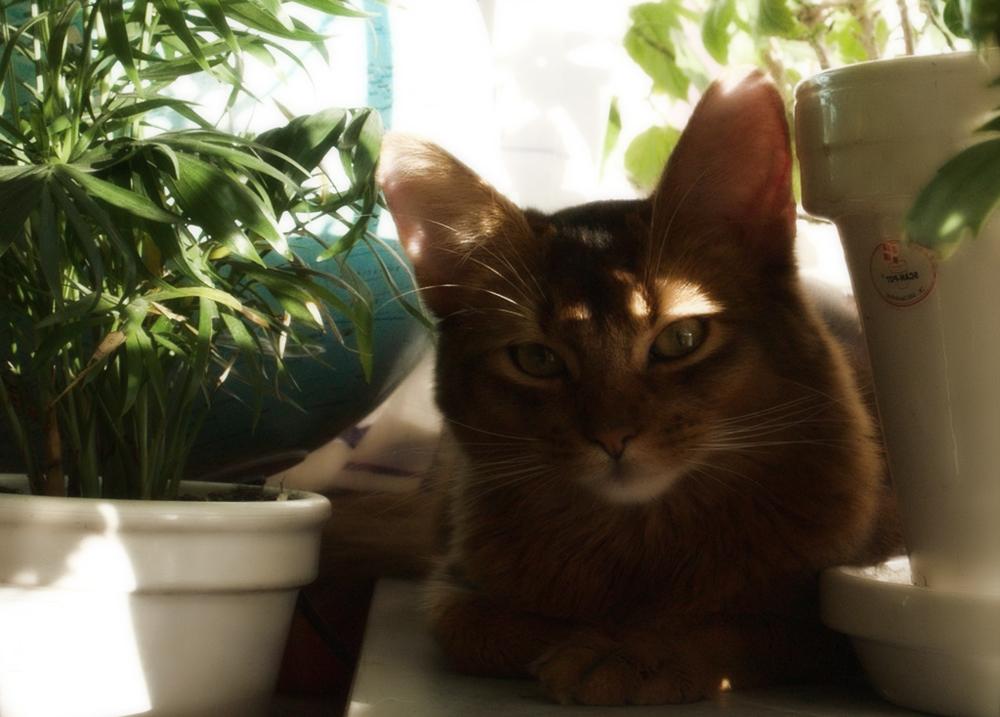 Мазь Аверсектиновая: инструкция для кошек