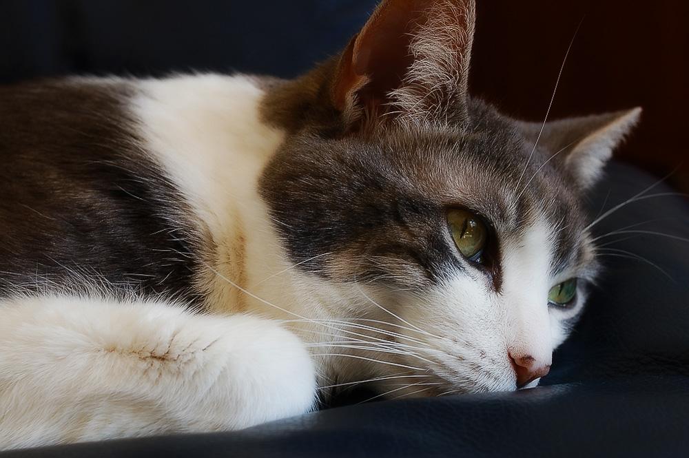 Ивермек инструкция по применению для кошек дозировка