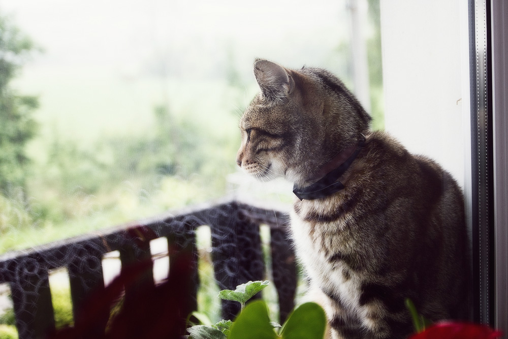 Прател для кошек: инструкция по применению