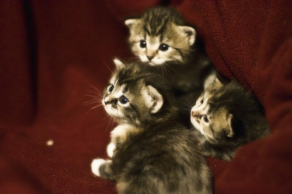 Русские клички котов список
