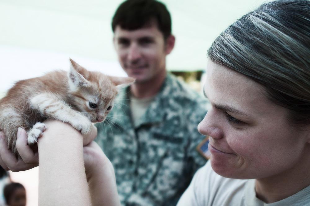 Прививки котятам и взрослым кошкам: график вакцинации