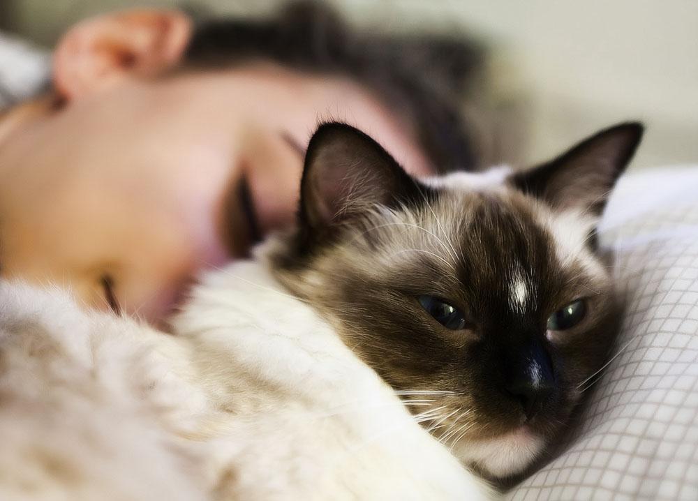 Самые ласковые породы кошек: ТОП-15