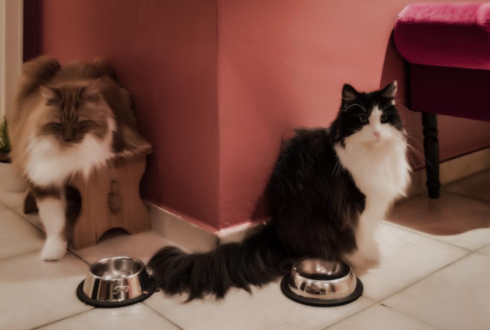 Сколько кот съедает сухого корма