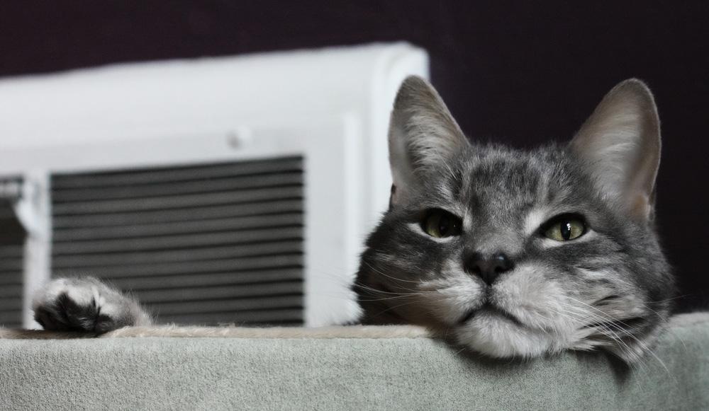 У кота черные точки на подбородке - как лечить?