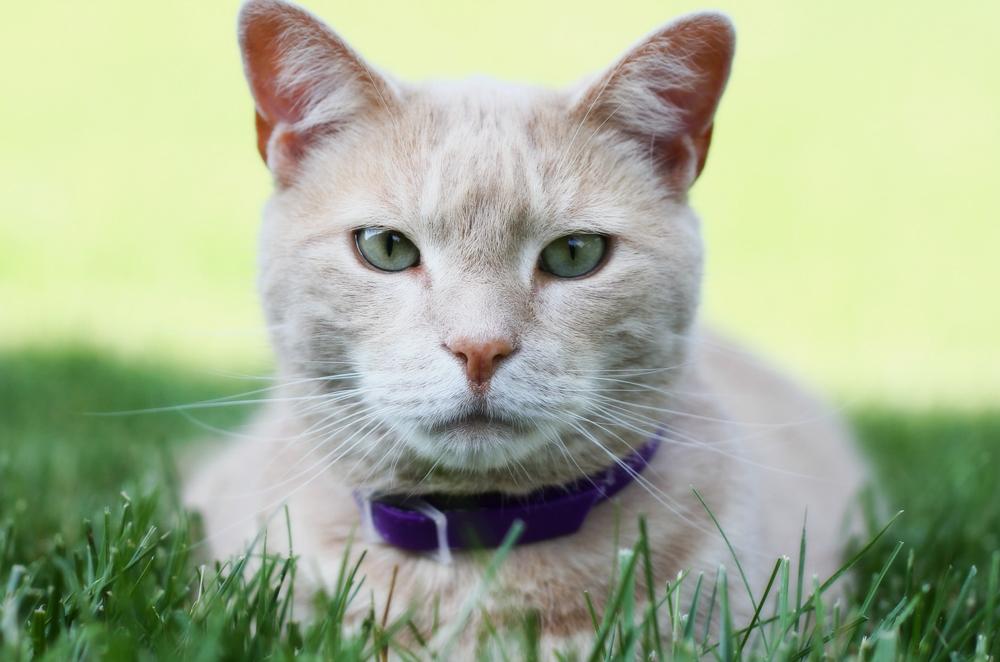 Витафел для кошек инструкция
