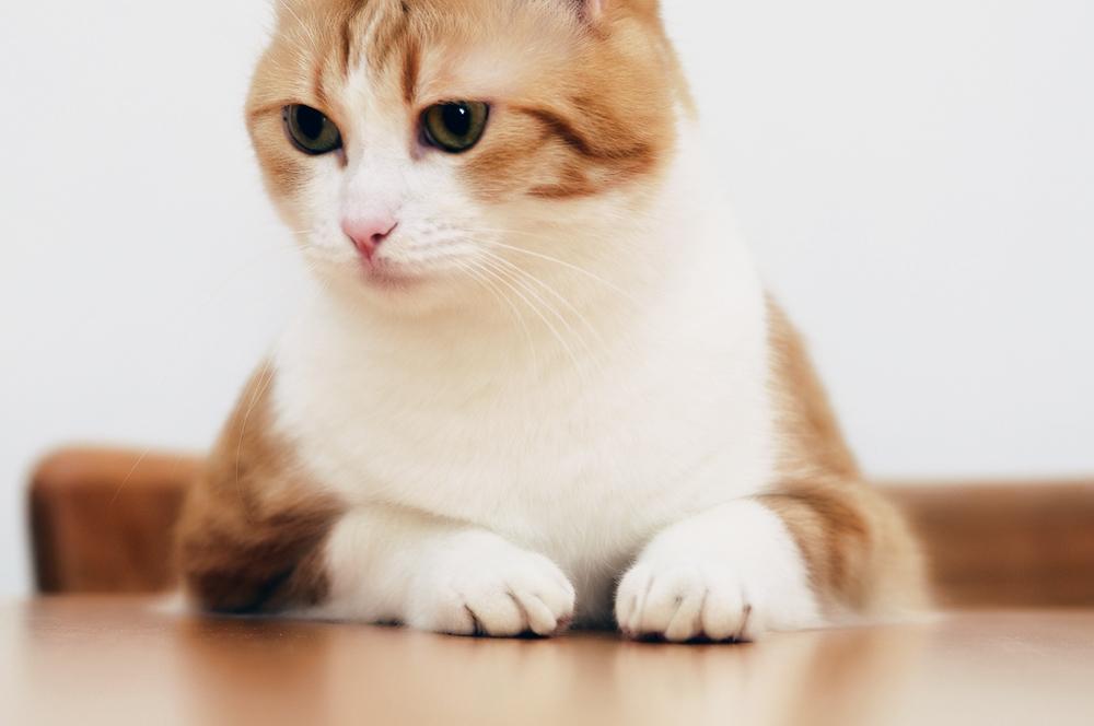 Витафел C для кошек: инструкция по применению