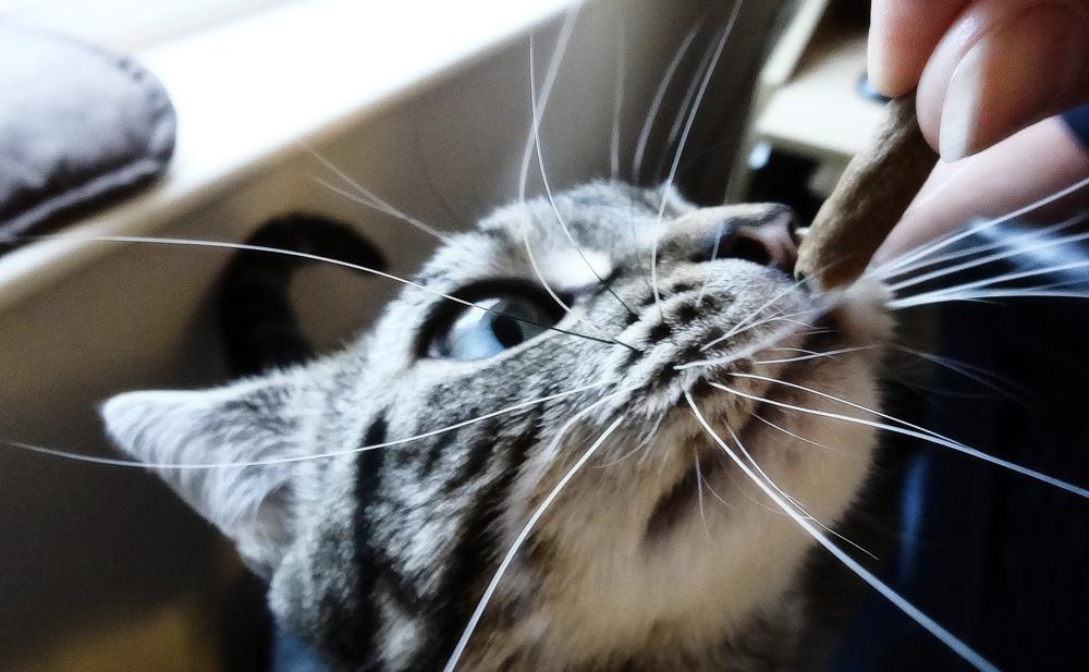 Зачем коту или кошке нужны усы?