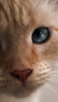Экзекан для кошек: инструкция по применению