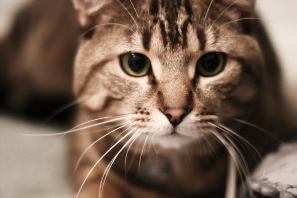 Ветом_11_инструкция_для_кошек_Frédérique_Lemieux