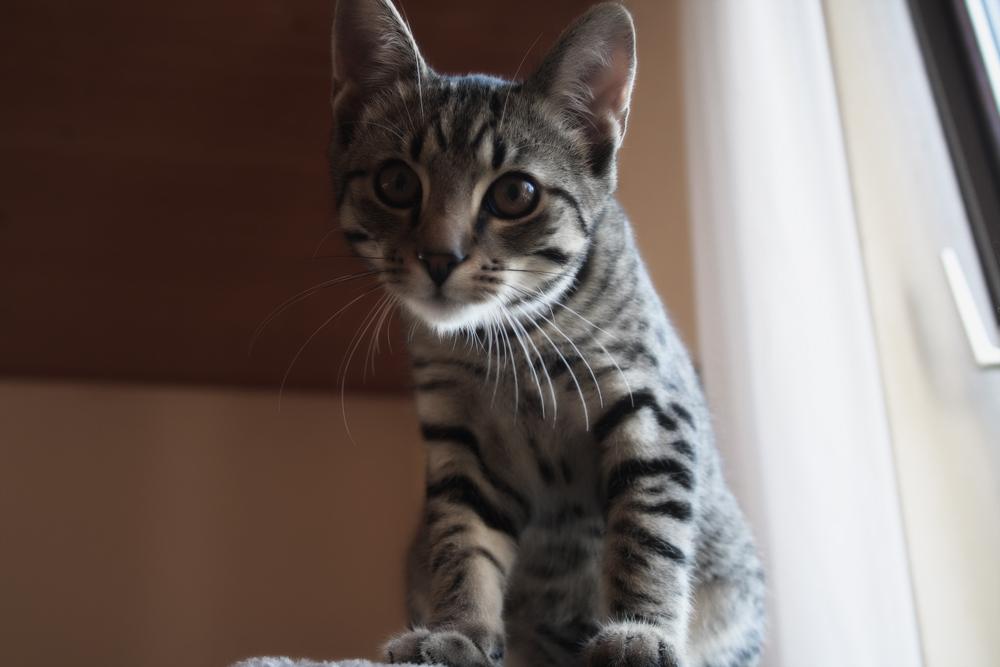 Ветом_11_инструкция_для_кошек_Vasquezz