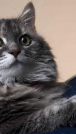 Аллергия у кошек: фото, симптомы и лечение