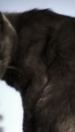 Автокормушка для кошек: виды и принцип действия