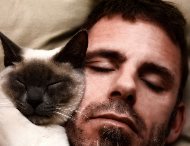 Если кошка спит в вашей постели, что это значит?