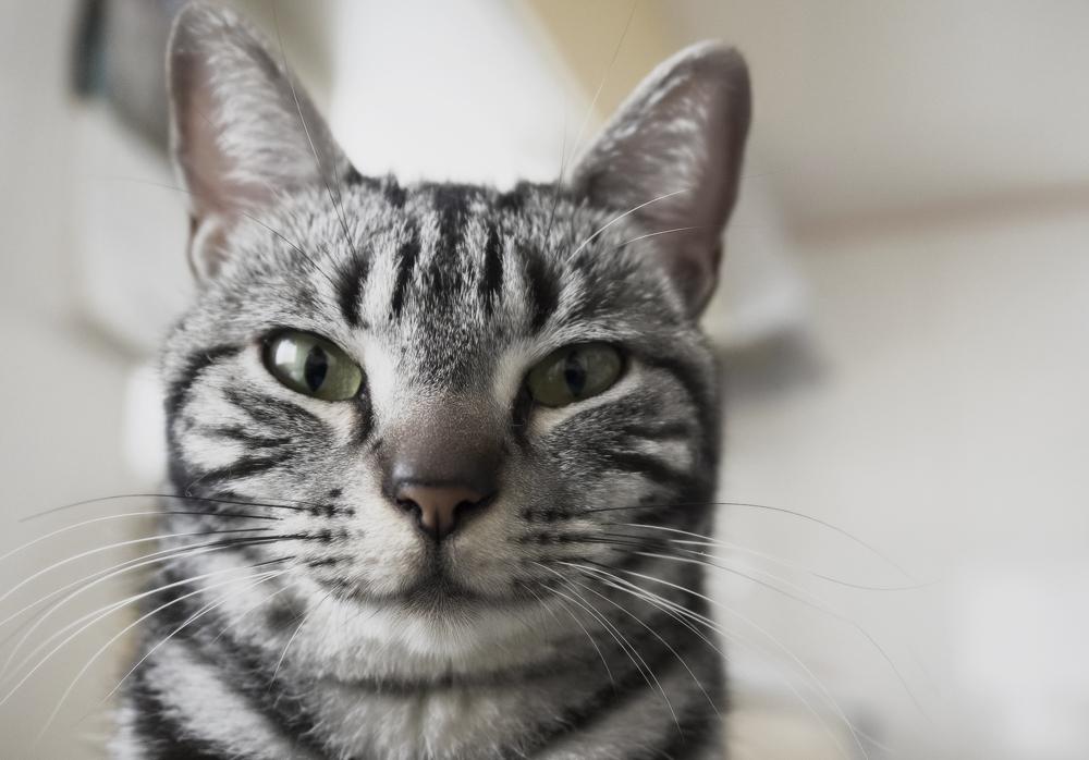Хелавит С для кошек: инструкция по применению