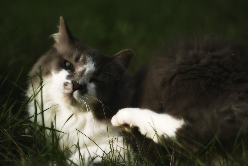 Ивермек - инструкция по применению для кошек
