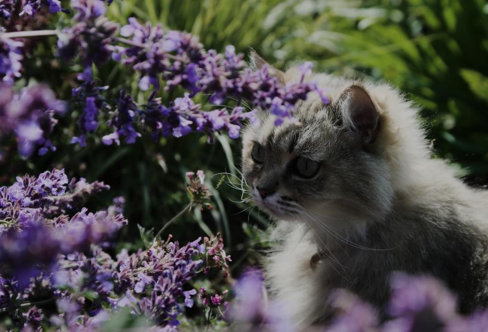 Какой запах не любят кошки: отпугивающие ароматы