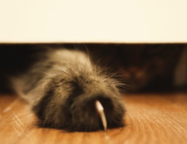 Когтерезка для кошек: виды и рекомендации, как ей пользоваться