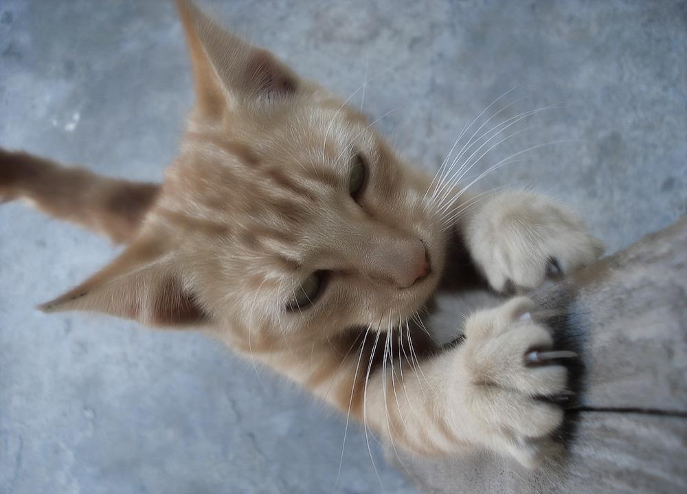 Когтеточки для кошек: как выбрать правильную конструкцию