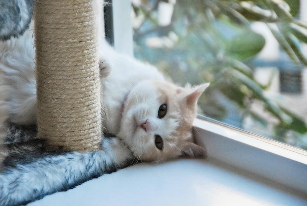 Какими бывают когтеточки и домики для кошек?