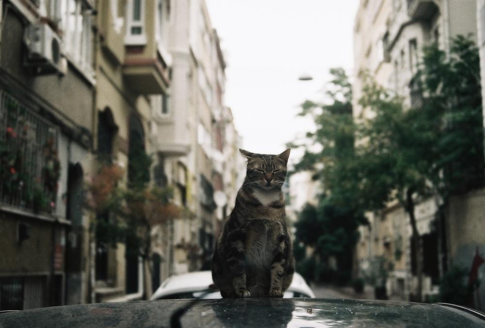 Куда деть кота, если он не нужен?