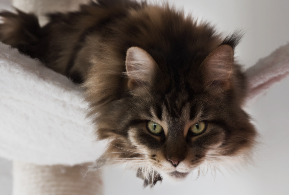 Домик-когтеточка для кошки своими руками