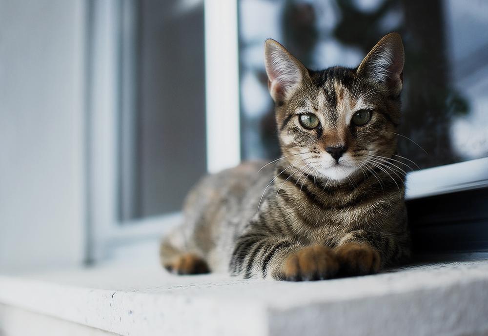 Капли для кошек ЭКС-5: инструкция по применению