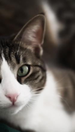 Болезни почек у кошек: симптомы и лечение