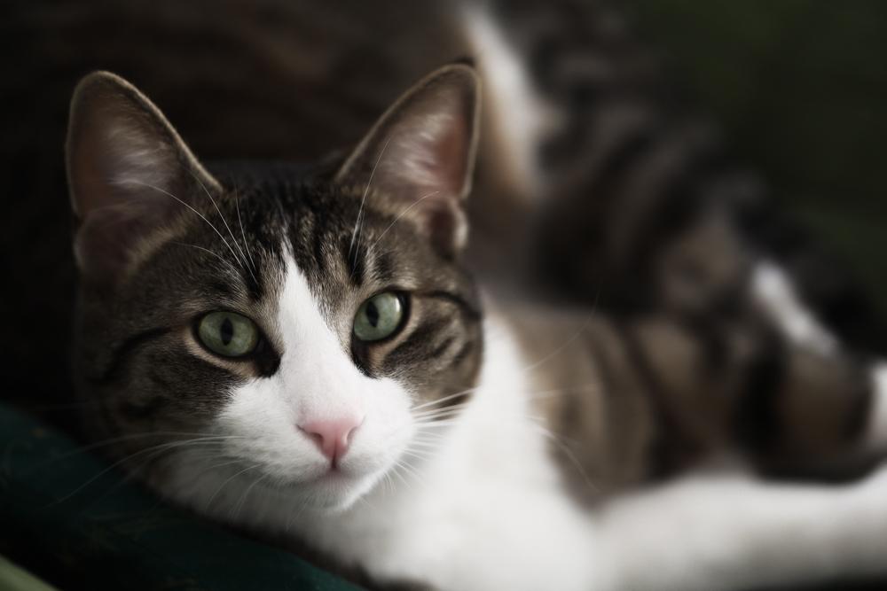 Купить Средства от блох и клещей для кошек и собак