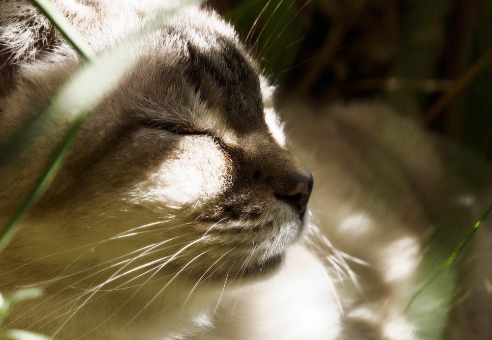 Гепатовет для кошек: инструкция по применению