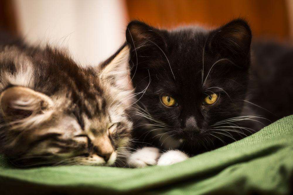 Какие имена можно дать котам