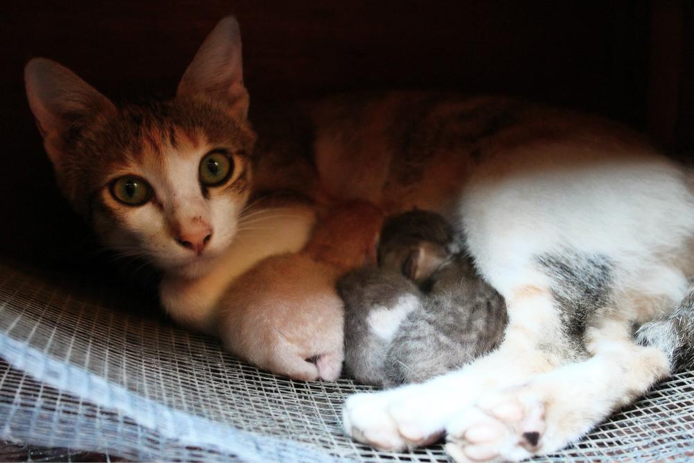 Как рожают кошки: признаки начала и сам процесс родов