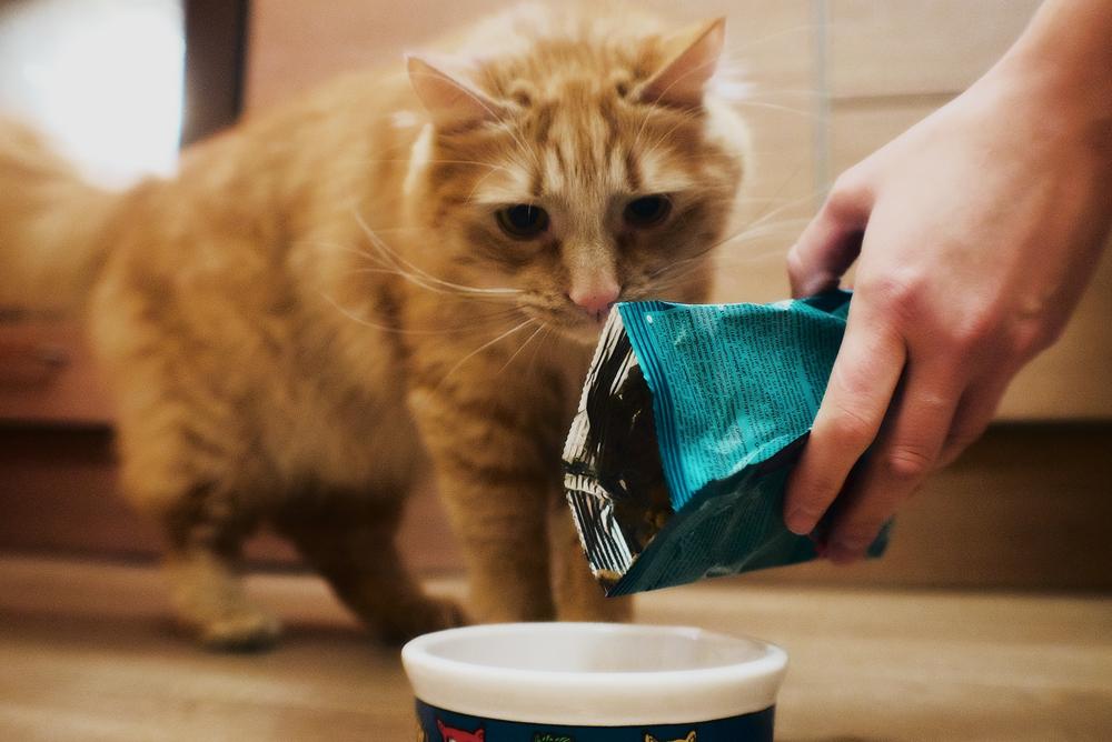 Корм для кошек Purina Pro Plan