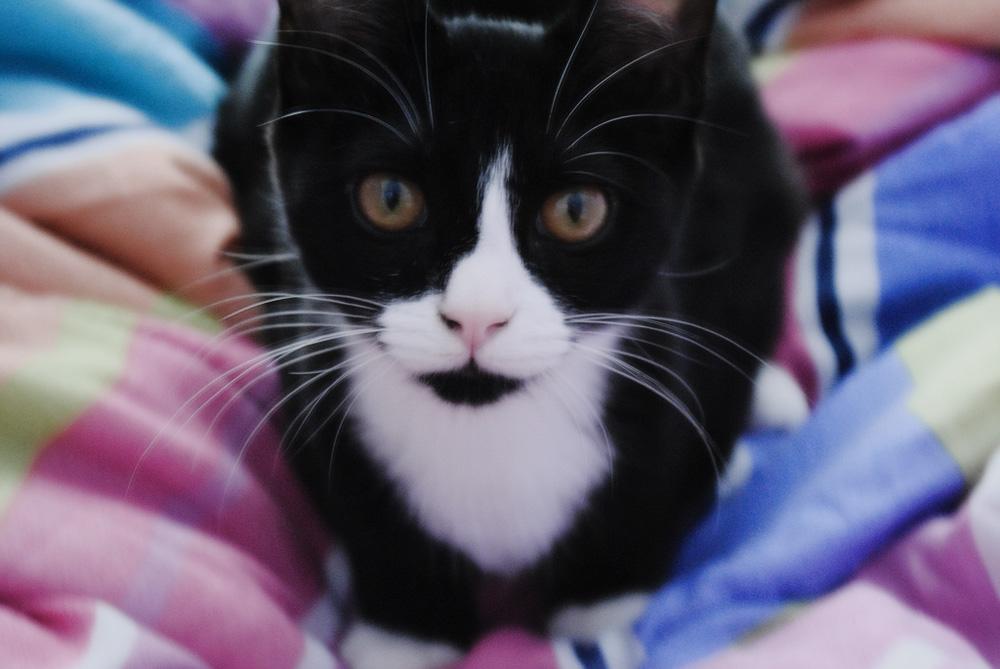 Темная моча у кота: что делать?