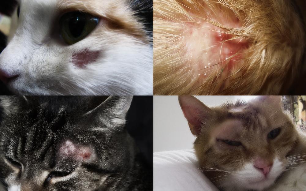 фото виды лишая у кошек
