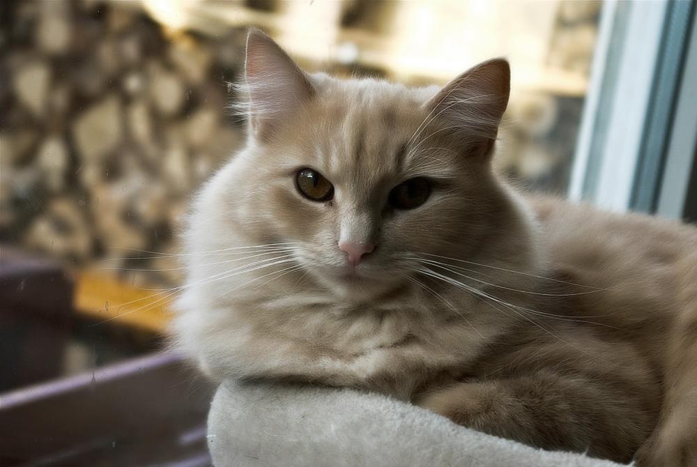 Виды лишая у кошек: симптомы и лечение