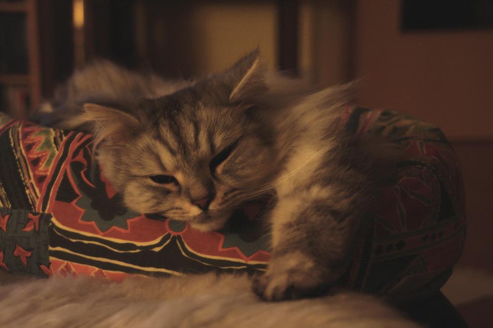 Чем лечить кошку от простуды в домашних условиях