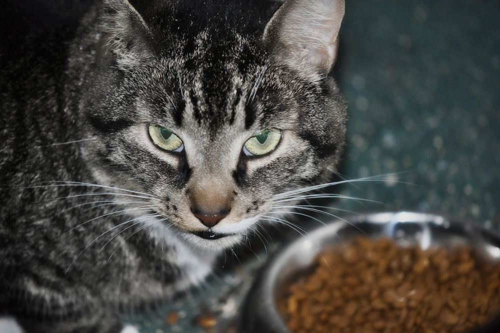 Лучшие гипоаллергенные корма для кошек