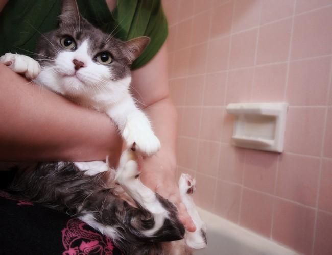 Как помыть кота правильно?