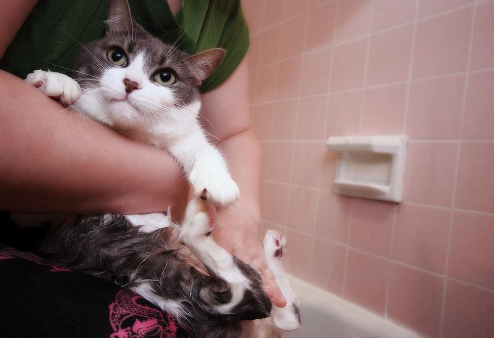 Как и чем помыть кошку в домашних условиях 300