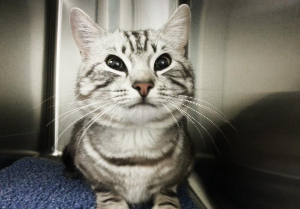 Кот после кастрации: поведение питомца и уход за ним
