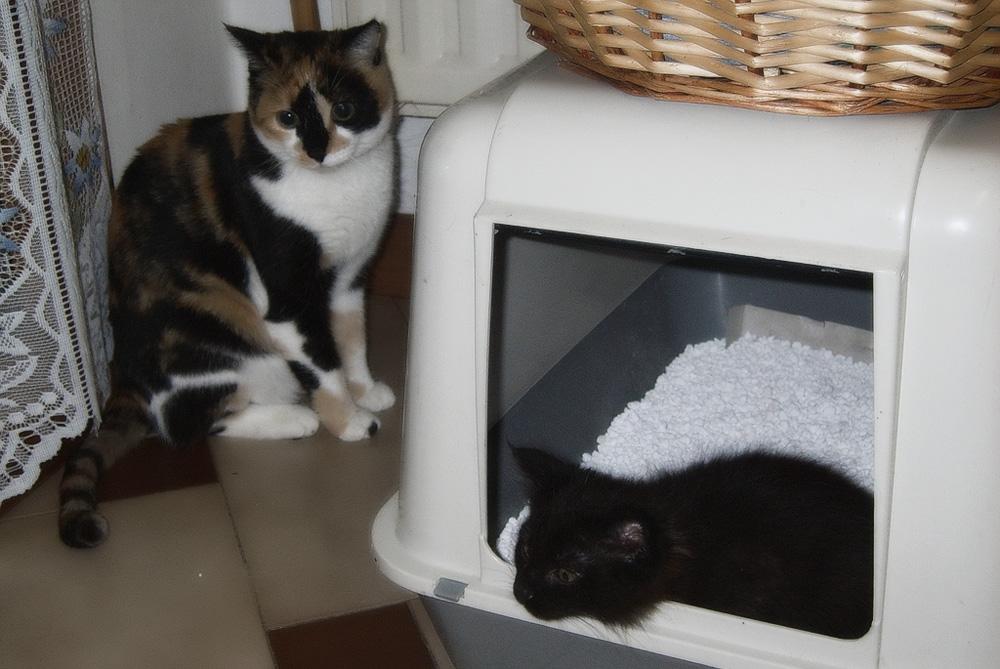 Как выбрать хороший лоток для кошки?