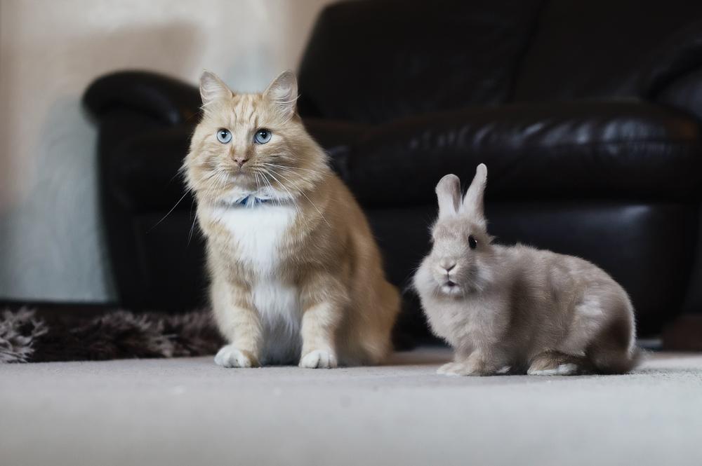 Ронколейкин для кошек: инструкция по применению