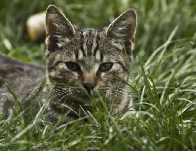 Лучшая трава для кошек